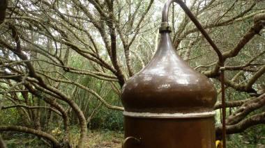 dans distiller